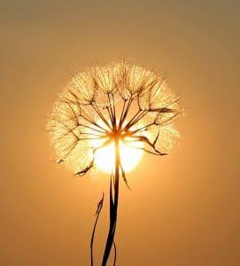 fleur ile cayman