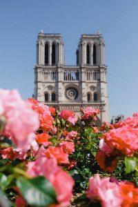rose paris cathédrale