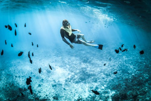 baignade avec poisson