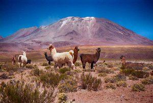 Préparer son voyage en Bolivie : quand partir ?