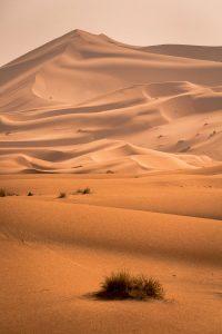 paysage Sahara