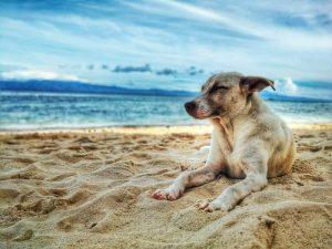 plage avec chien