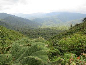 foret Irazù Costa Rica