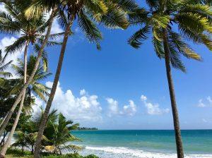 Grand'Rivière Martinique