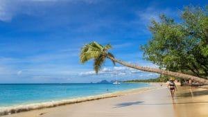 Sainte Luce Martinique : ce qu'il faut savoir