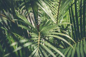 rando dans la jungle
